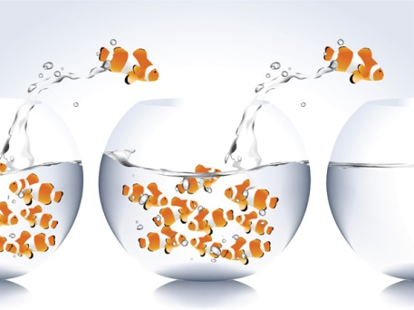 fish 3 (1)